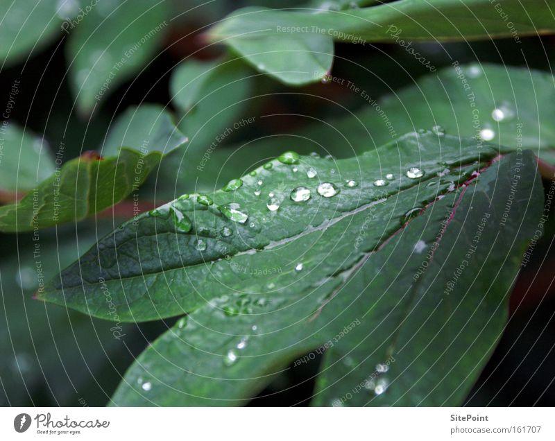 Tau Frühling Morgen Wassertropfen Tropfen grün Blatt Pflanze Park