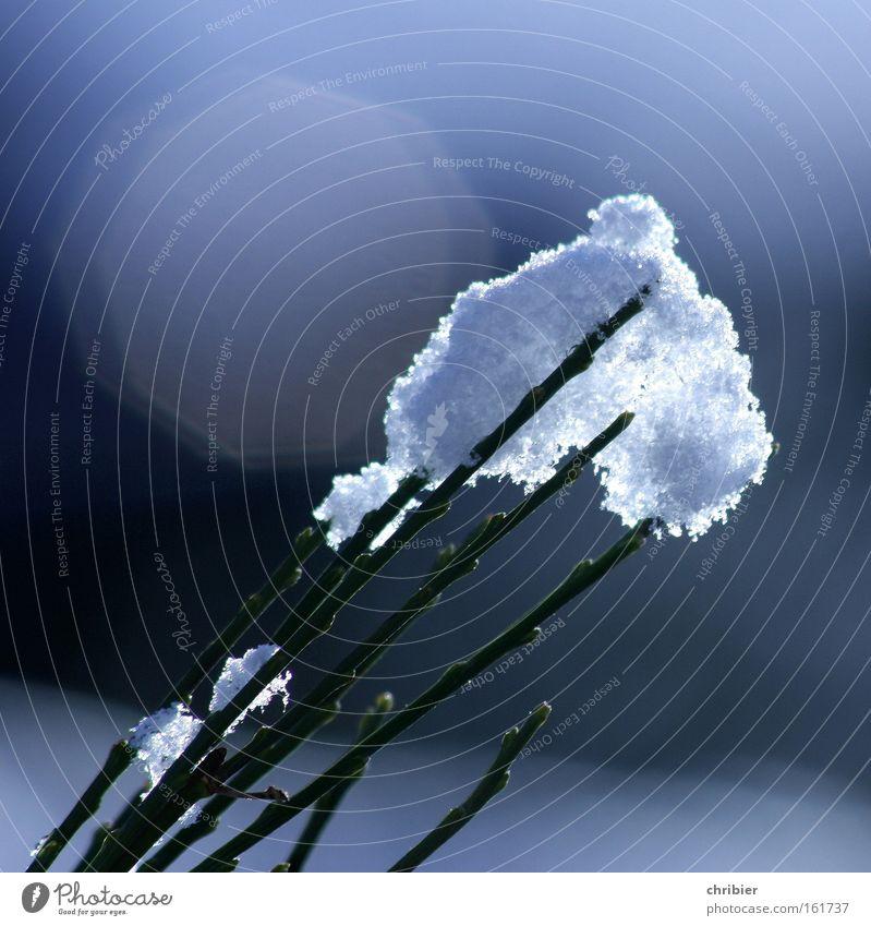 Eis am Stiel blau weiß Winter Schnee Traurigkeit glänzend Frost weich strahlend Ginster