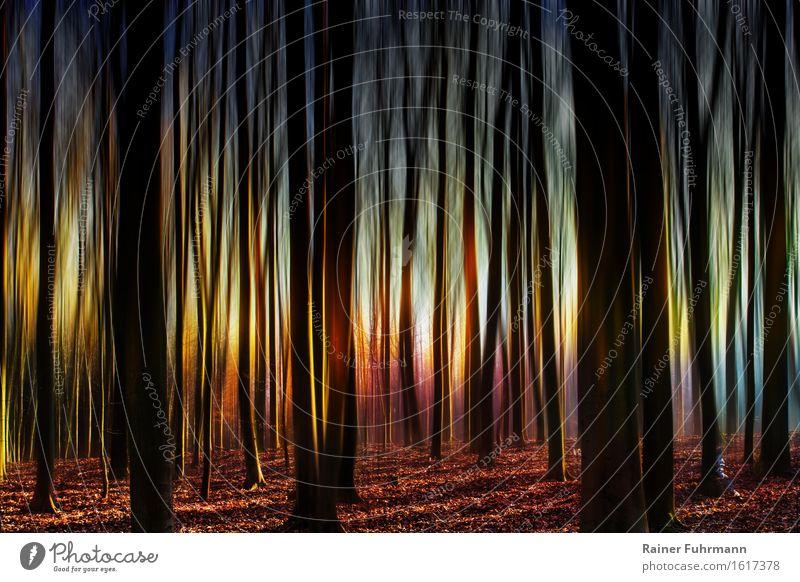 Im Geisterwald bei seltsamen Licht Natur Landschaft Wald außergewöhnlich wild Angst gefährlich Schüchternheit Farbfoto Außenaufnahme Sonnenstrahlen Gegenlicht
