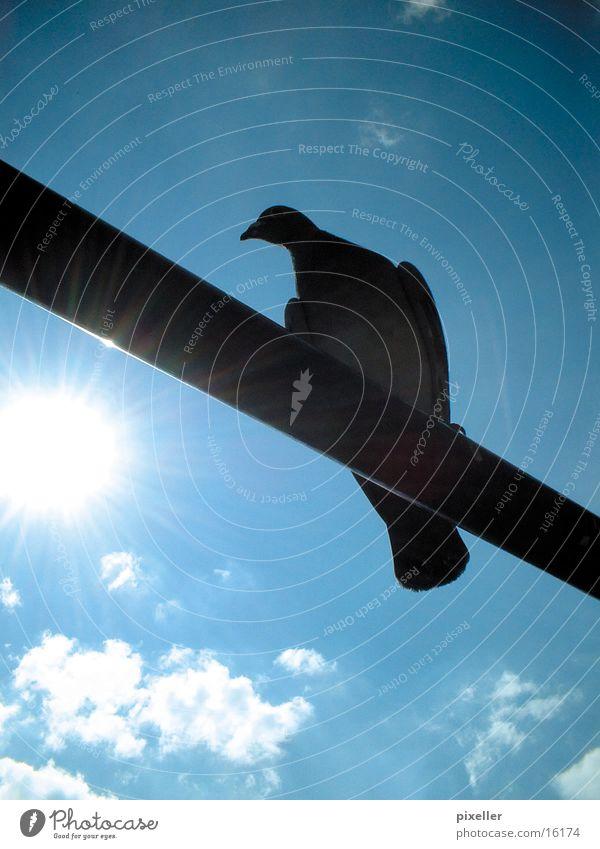 Stangenvogel Taube Vogel Stab Wolken Verkehr Himmel Sonne blau Schatten siluette