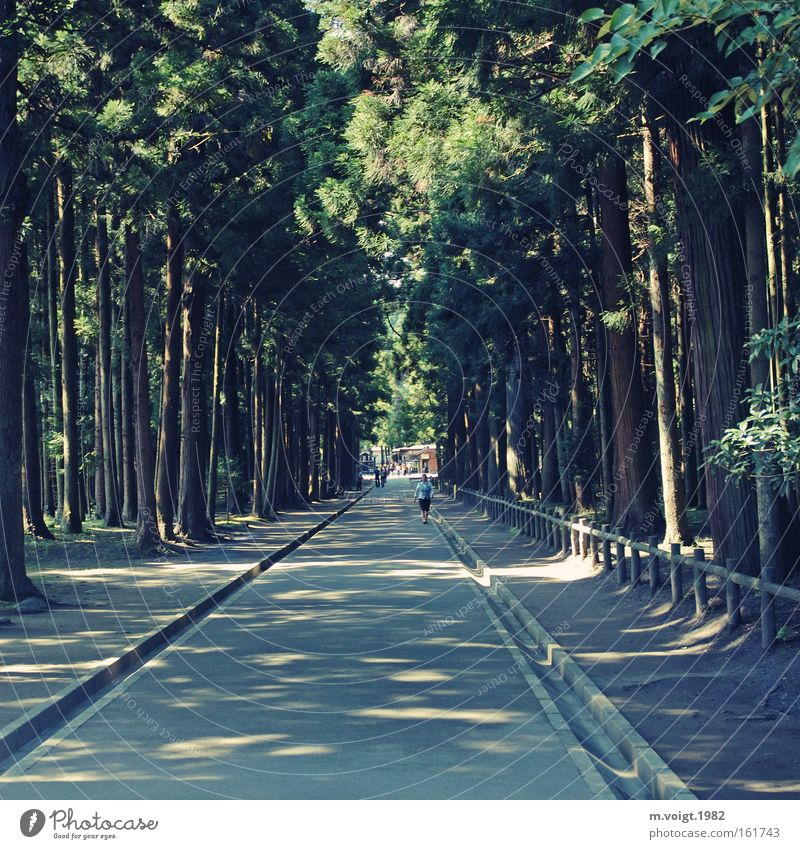 Waldweg Wege & Pfade gerade Schatten Licht Nadelbaum alt Ziel Fußweg Natur Baum Mensch Park Sommer Mittelpunkt