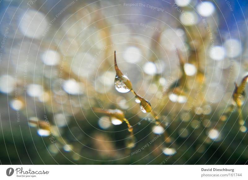 Ocean of Tears Natur Wasser Pflanze Herbst Gras Regen nass Wassertropfen Tropfen feucht Lichtpunkt Blendenfleck hydrophob Makroaufnahme Lichtfleck