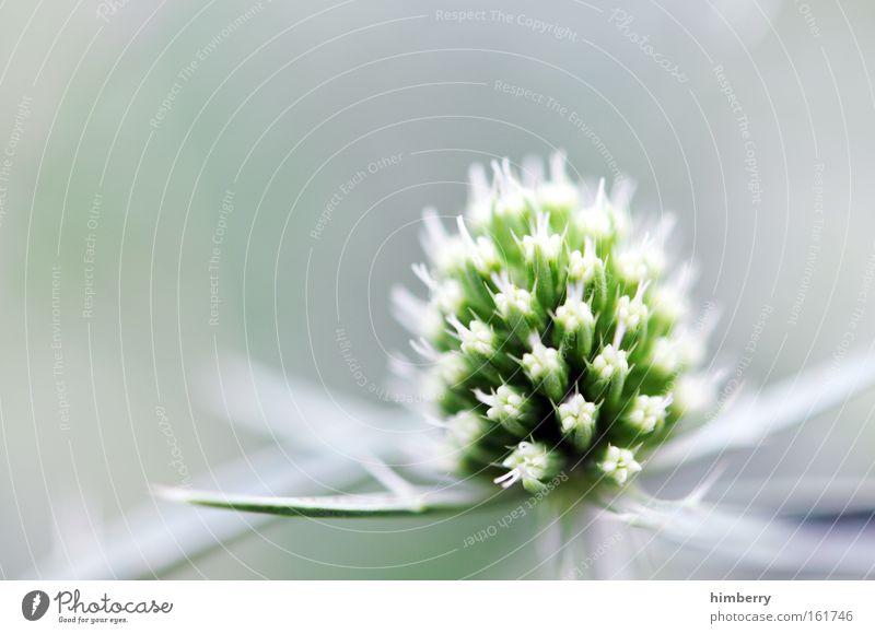 spring break Natur Pflanze schön grün Sommer Erholung Blume ruhig Frühling Blüte Hintergrundbild Park Zufriedenheit Dekoration & Verzierung frisch ästhetisch