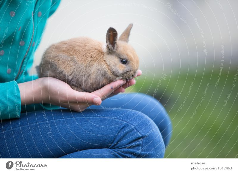 i bleib bei dir Kind blau grün Hand Erholung Mädchen Tierjunges Beine Garten braun Zusammensein Zufriedenheit Körper sitzen Kindheit genießen