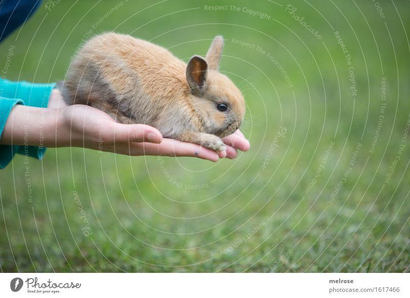 und Sprung ... Mensch Kind grün Hand Erholung Tier Mädchen Tierjunges klein braun Zusammensein sitzen Kindheit genießen Finger niedlich