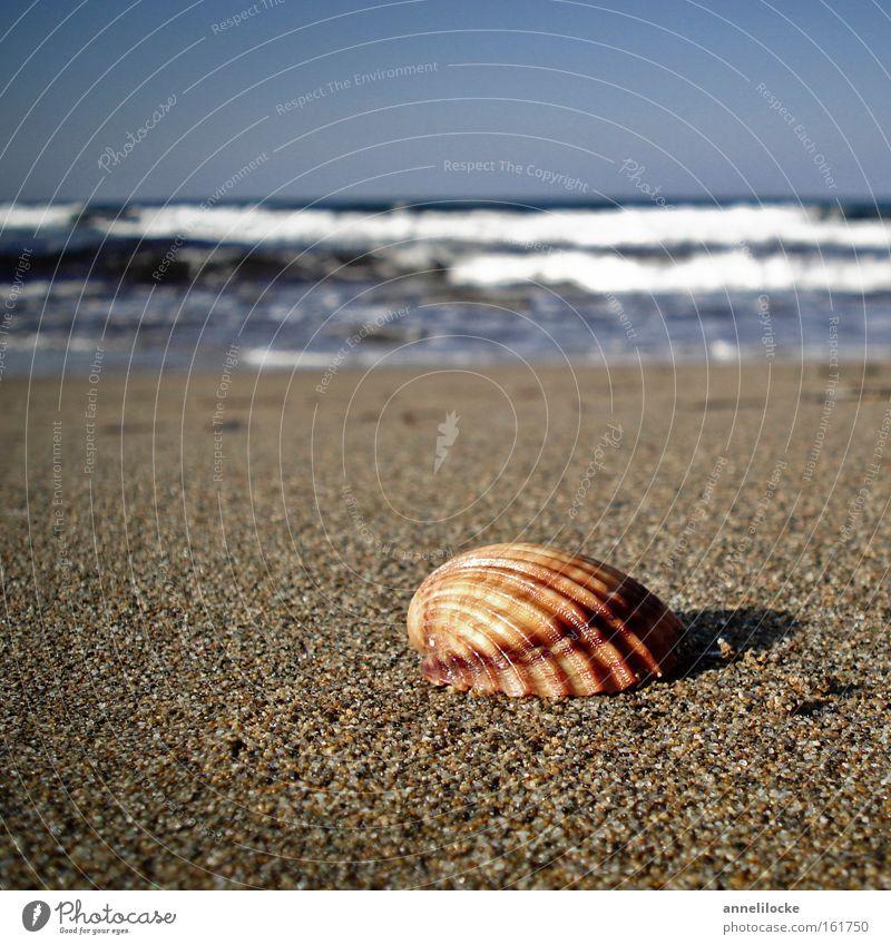 Strandspaziergang Natur Wasser Meer Sommer Strand Ferien & Urlaub & Reisen Erholung Wärme Sand Wellen Küste wandern Suche Insel Tourismus Spaziergang