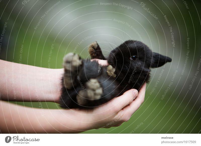 !!! 600 !!! Mensch Kind grün Hand Erholung Tier Mädchen schwarz Tierjunges klein braun Zusammensein Zufriedenheit Kindheit Arme genießen