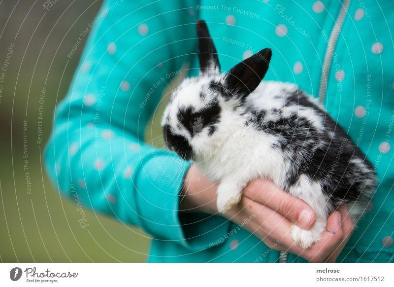 eine Hand voll Flecky Mädchen Arme Finger Oberkörper 1 Mensch 8-13 Jahre Kind Kindheit Garten Haustier Tiergesicht Fell Pfote Zwergkaninchen Nagetiere Säugetier