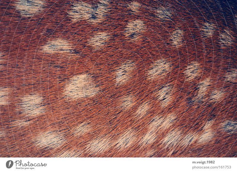 Bambi - Nahaufnahme Fell Reh Wildtier wild Punkt Fleck gefleckt braun weiß Rehkitz Hirschkalb Säugetier wildlife