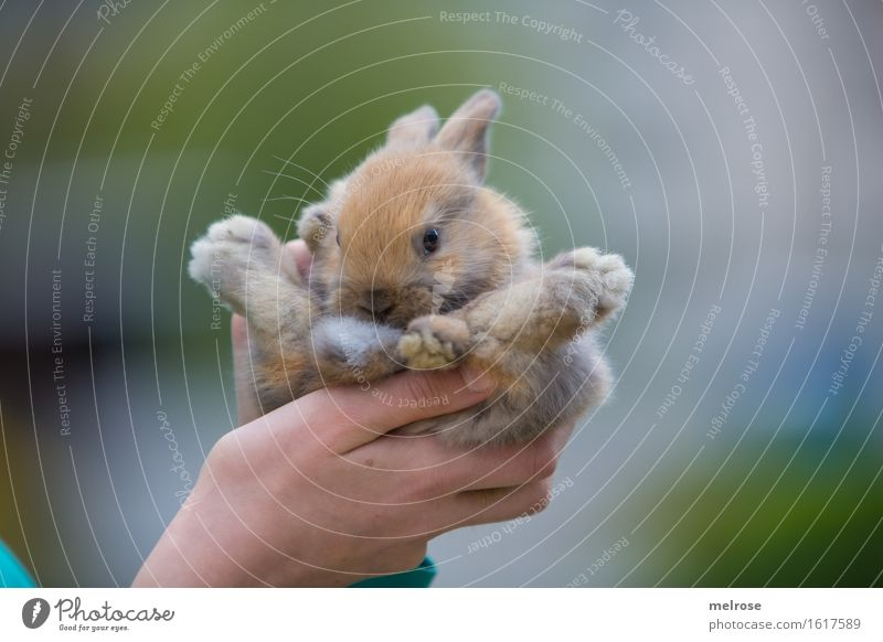s p o r t l i c h Mensch Kind grün Hand Erholung Tier Mädchen Tierjunges klein grau braun Zufriedenheit Kindheit Arme genießen Finger
