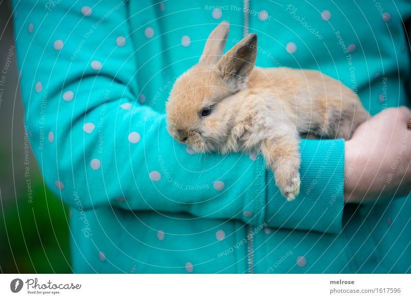 endlich F E I E R A B E N D Mensch Kind grün Hand Erholung Tier Mädchen Tierjunges klein braun Kindheit Arme genießen Finger niedlich weich