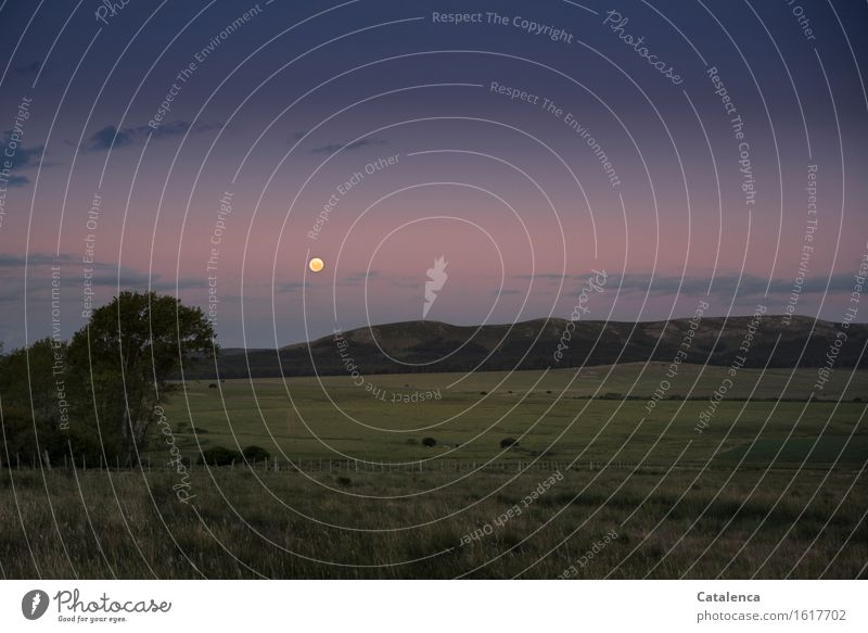 Vollmond wandern Natur Landschaft Himmel Mond Schönes Wetter Wiese Feld Hügel beobachten Erholung glänzend alt ästhetisch Ferne groß rund blau gold grün violett