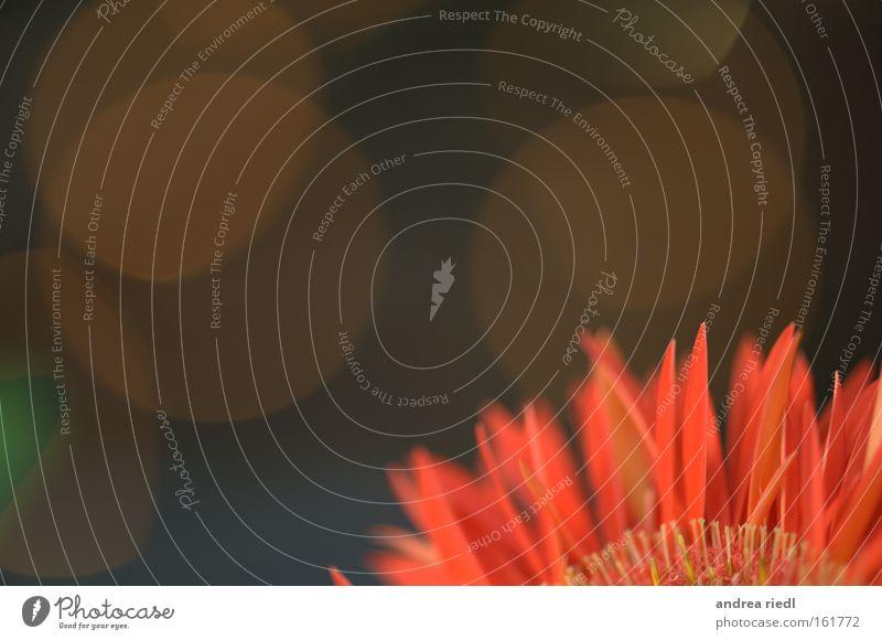 Flower flame Natur schön Pflanze Blume Freude Farbe Erholung Blüte orange Energiewirtschaft Kreis Lust Biologische Landwirtschaft