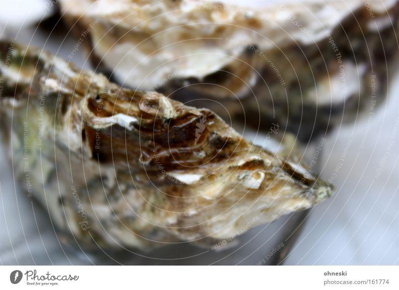Glitschig Meeresfrüchte Ernährung Auster Champagner Restaurant Erfolg Gastronomie Fisch Muschel kalt Dekadenz salzig Meerwasser Jetset sehr salzig Farbfoto