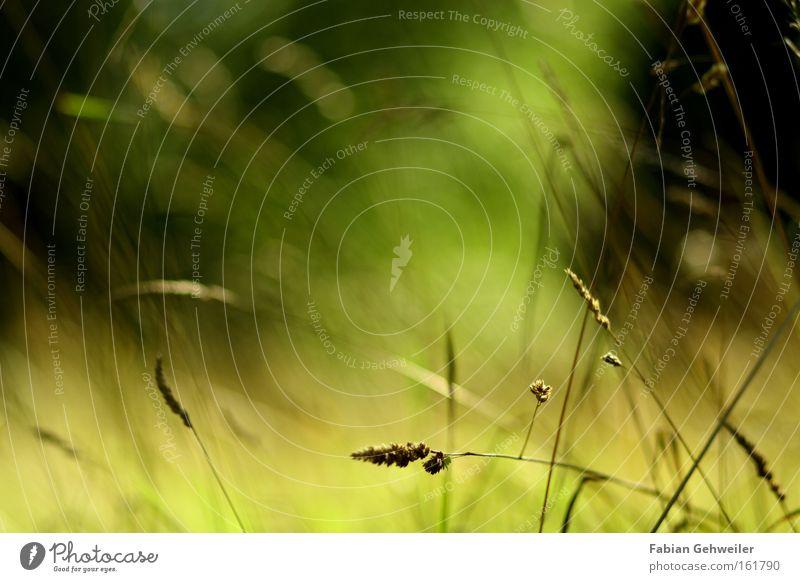 Allusion to a illusion Natur Sommer Gras Wind Illusion angenehm mild