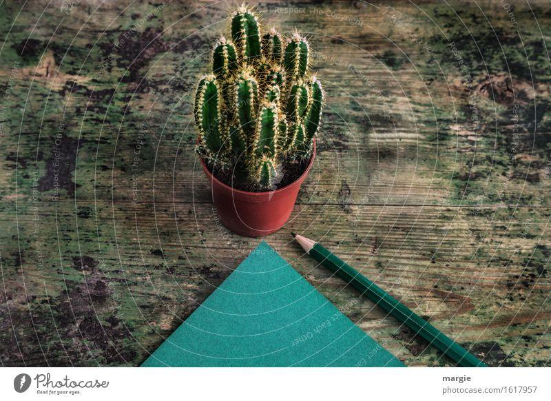 Spitzfindige Nachricht: ein Kaktus im Blumentopf und ein grüner Notizzettel mit einem Bleistift auf einem alten Holztisch lernen Beruf Büroarbeit Arbeitsplatz
