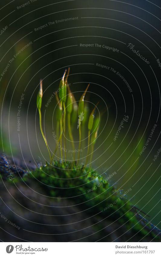 Nicht alleine Farbfoto Nahaufnahme Detailaufnahme Makroaufnahme Strukturen & Formen Tag Kontrast Natur Pflanze Frühling Gras Moos grün Boden Textfreiraum oben