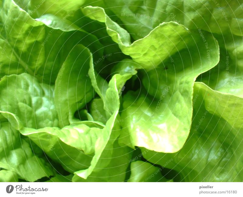 saladfood grün Pflanze Ernährung Gesundheit Gemüse Salat Vegetarische Ernährung