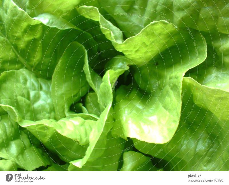 saladfood grün Pflanze Gesundheit Salat Vegetarische Ernährung