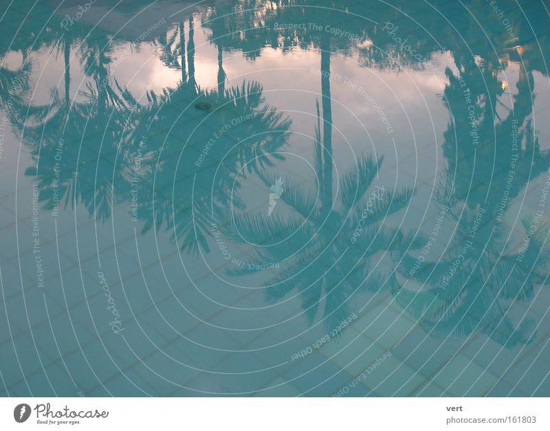 palm pool Schwimmbad Wasser Palme Reflexion & Spiegelung blau Sonnenuntergang Urwald Bali Ferien & Urlaub & Reisen Erholung durchsichtig Menschenleer