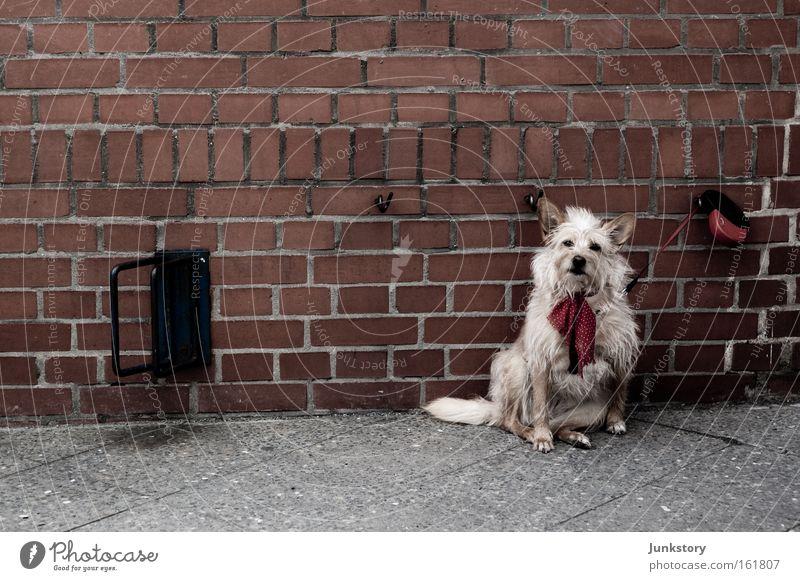 Brick-Dog Backstein Mauer Hund Seil warten ausgesetzt Haustier Einsamkeit Wand gefangen Säugetier Straßenhund
