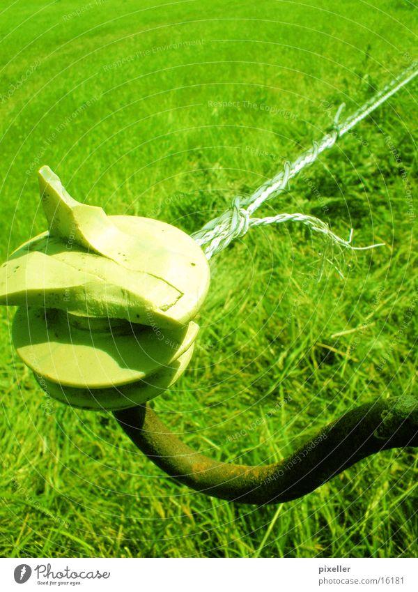 zaungast Elektrizität Wiese grün Weide Zaun stromzaun
