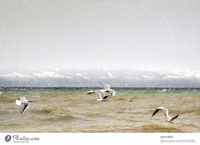 stormy weather Natur Wasser Landschaft Winter Leben Schnee fliegen Stimmung Vogel Wellen Kraft Tiergruppe Urelemente Seeufer Alpen Leidenschaft