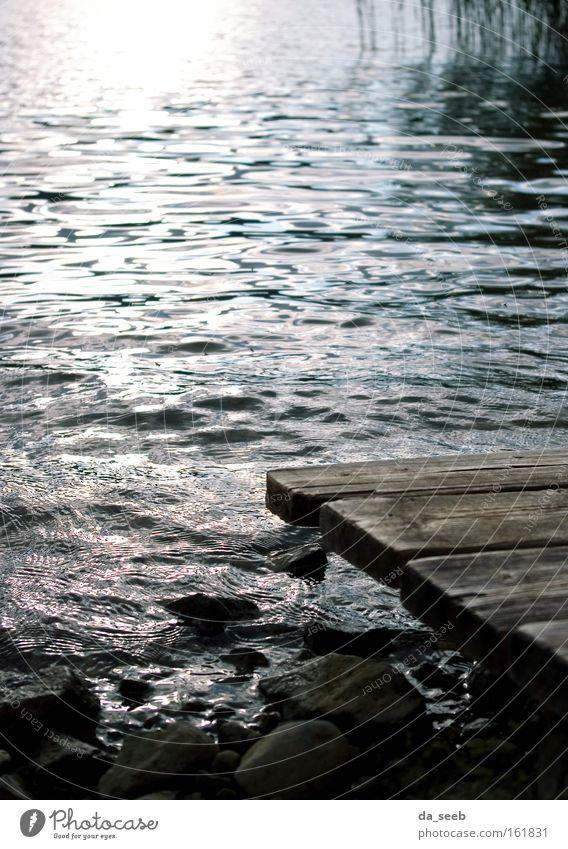 Am See Wasser Sommer Strand ruhig Einsamkeit Holz Stein Gewitter Schilfrohr Steg Seeufer Teich
