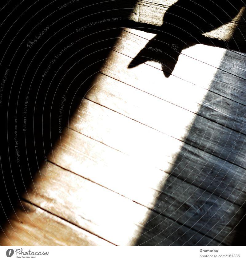halber Fisch ruhig Bodenbelag Ohr beobachten hören Schatten Säugetier Flur lau