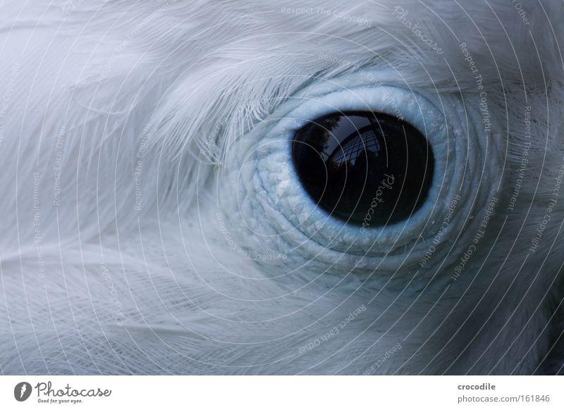 Gefangenschaft Auge Vogel gefangen Gitter Käfig Feder schwarz Reflexion & Spiegelung blau weiß schön Traurigkeit Blick Papageienvogel Trauer Verzweiflung