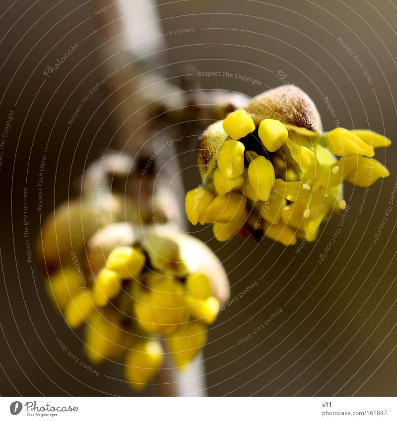 Frühlingserwachen Blüte zart Blume Ast Pflanze Natur Wärme Wetter schön Freude Makroaufnahme Nahaufnahme Blütenknospen Haare & Frisuren