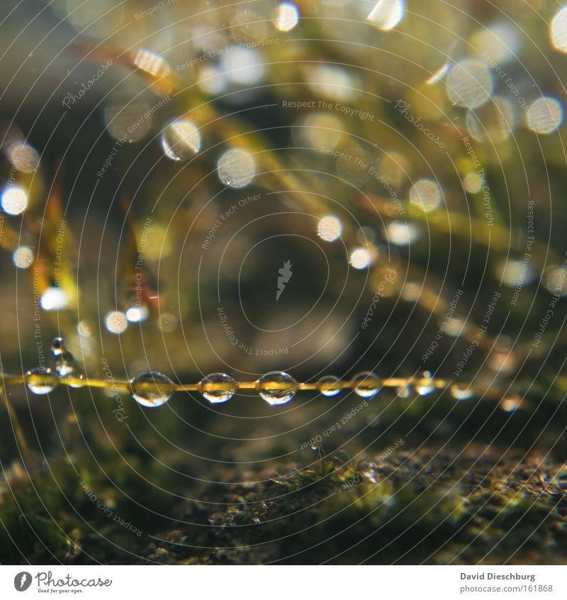 Tropfenzauber Natur Pflanze Wasser Regen Wassertropfen viele Stengel Kugel Halm Reihe silber feucht aufgereiht hydrophob