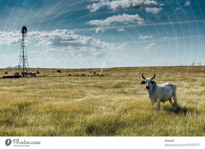 Weites Land Himmel Natur Ferien & Urlaub & Reisen Pflanze Landschaft Wolken Tier Ferne Umwelt natürlich Horizont Tourismus Klima Schönes Wetter Abenteuer