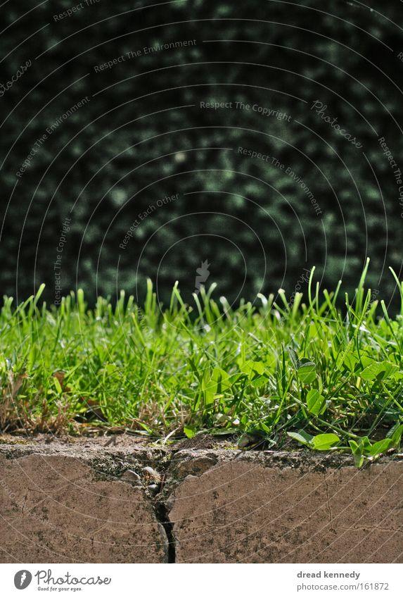 Gras Natur Sommer ruhig Straße Leben Erholung Wiese Garten Stein Park Zufriedenheit glänzend Erde frisch Wachstum