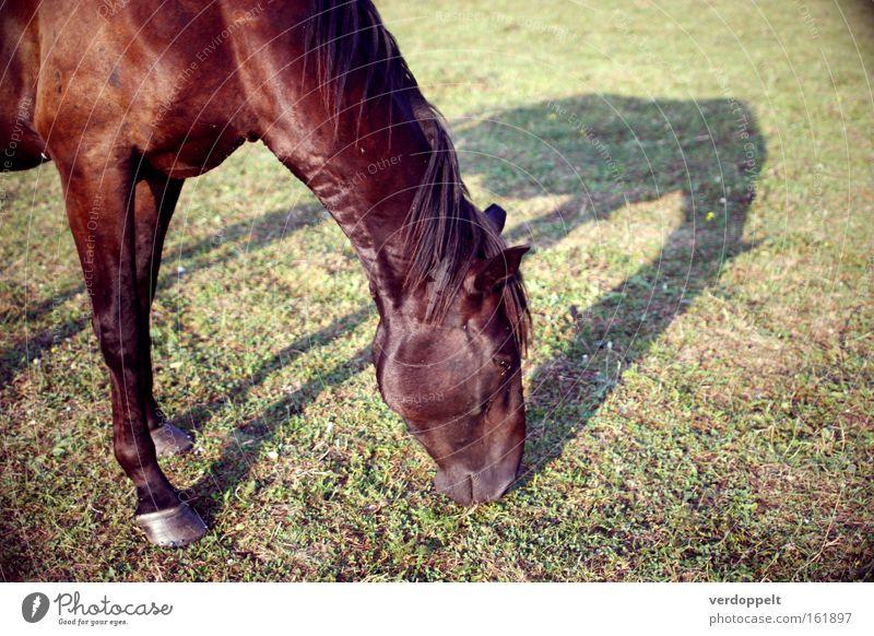 0_4 Tier pferd Natur Giraffe Schatten Tiere fressen