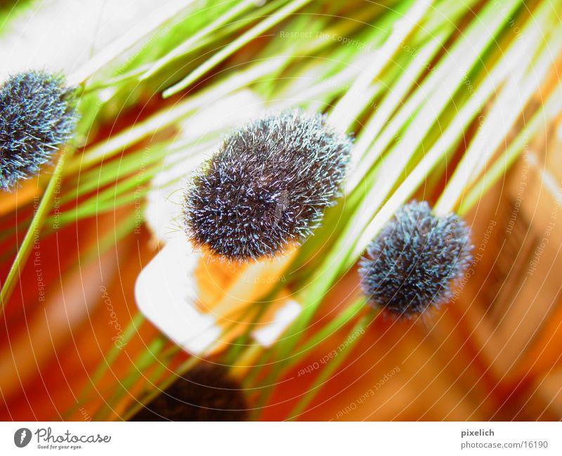 deko Blume grün Gras Dekoration & Verzierung Häusliches Leben
