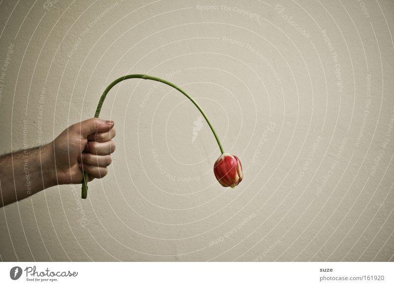 I'm sorry Hand Blume Gefühle Wunsch Trauer böse Tulpe danke schön Sünde Entschuldigung warum Fragen offenbaren