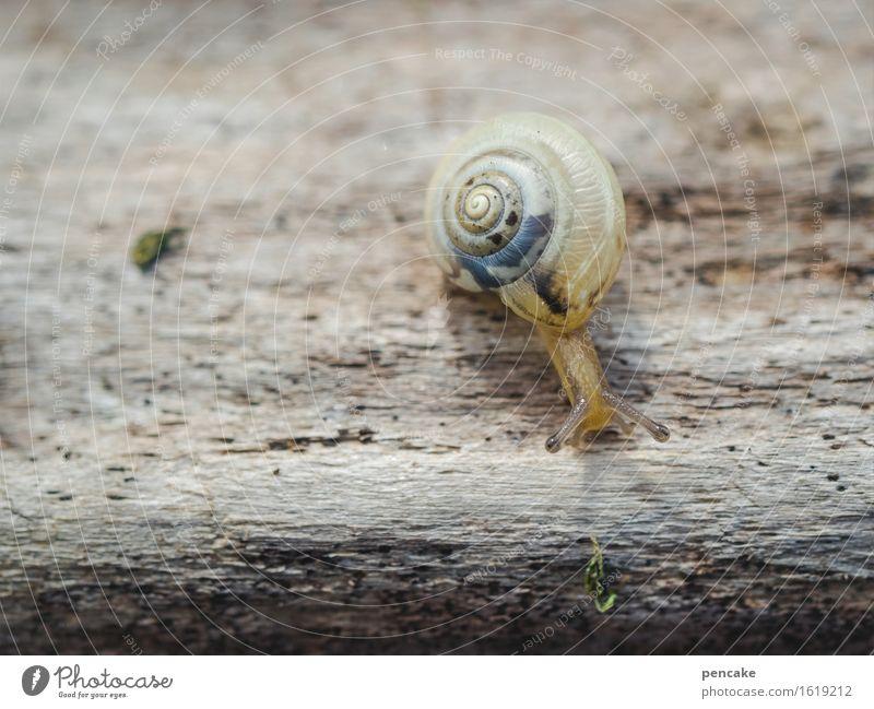 die entdeckung der langsamkeit Natur Tier 1 Zeichen beobachten berühren Bewegung entdecken Neugier niedlich rund schön unten blau braun Schnecke Schneckenhaus
