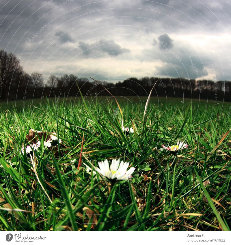 April, April Froschperspektive Frühling Wiese Rasen Wolken Wetter Gänseblümchen Gras Park Frühblüher Fischauge aprilwetter frühlingsboten