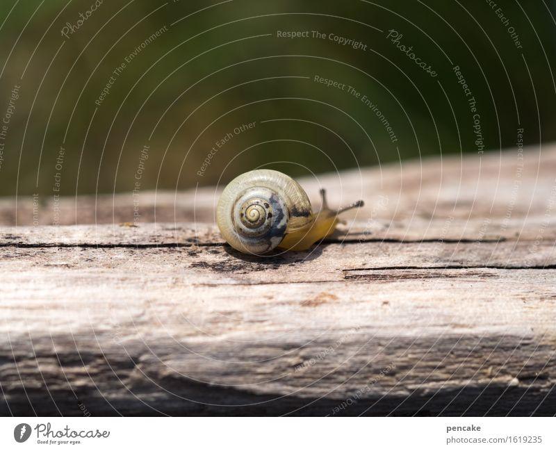 die zeitreisende Natur Tier Schnecke 1 Holz Zeichen Bewegung entdecken Warmherzigkeit achtsam Gelassenheit ruhig Altholz Treibholz Unschärfe klein Tierjunges