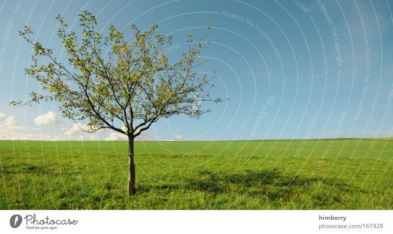 windows apfelbaum Natur Himmel Baum grün Pflanze Sommer Ferien & Urlaub & Reisen ruhig Wolken Ferne Erholung Wiese Gras Frühling Freiheit Landschaft