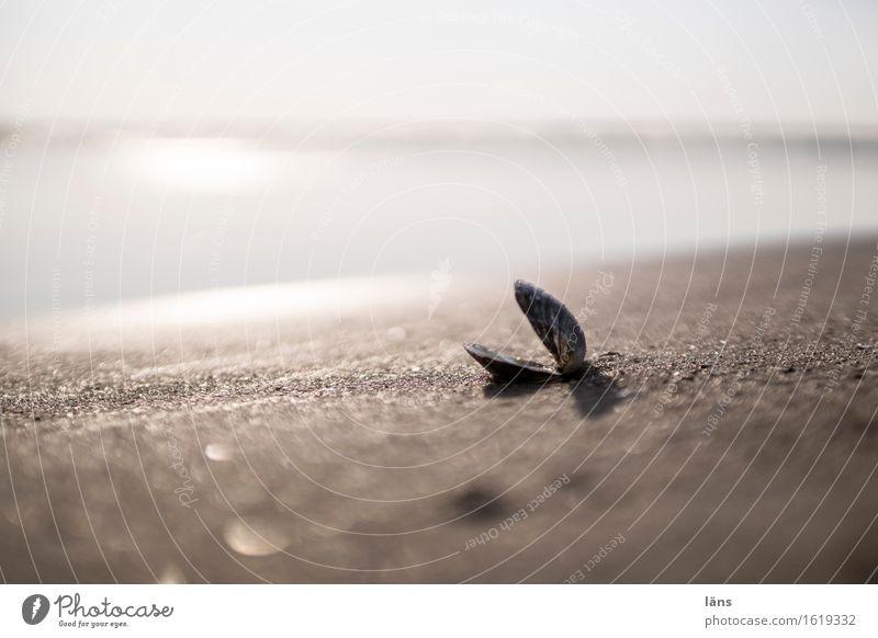offensichtlich Ferien & Urlaub & Reisen Tourismus Ausflug Strand Meer Umwelt Natur Urelemente Sand Luft Wasser Himmel Sonne Schönes Wetter Küste Ostsee liegen