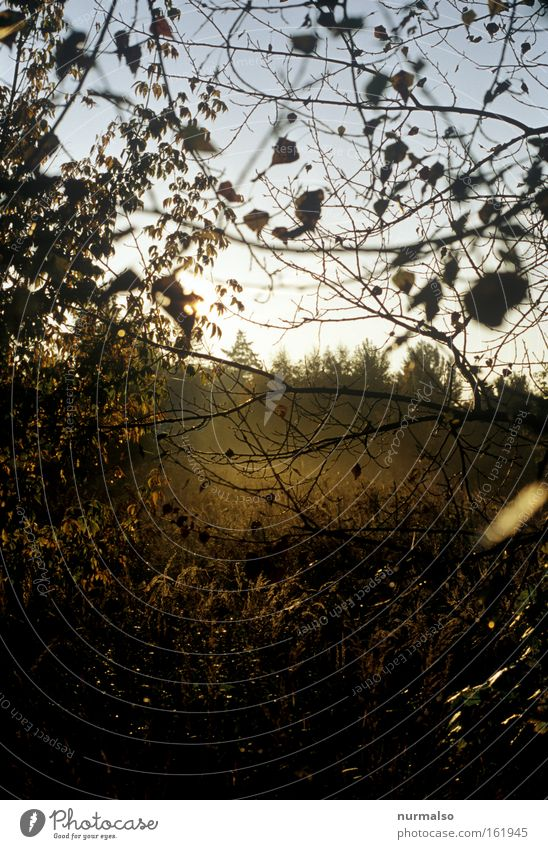 das wird was Natur Sonne Sommer Tod Wärme Stimmung Nebel Europa Wildtier Urwald Wildnis aufgehen