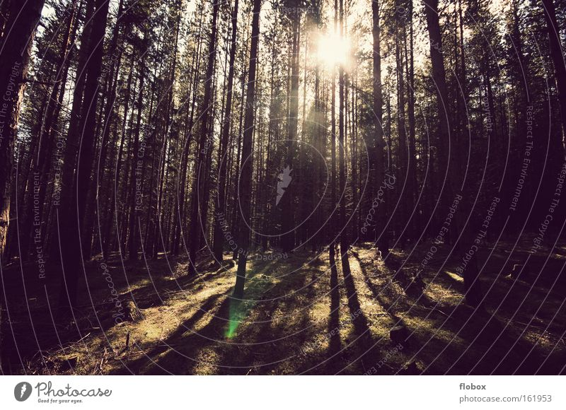 Frühling Wald Baum Sonne Sonnenstrahlen Wärme Winter Schatten Gegenlicht Natur Tanne Forstwirtschaft Umwelt schön