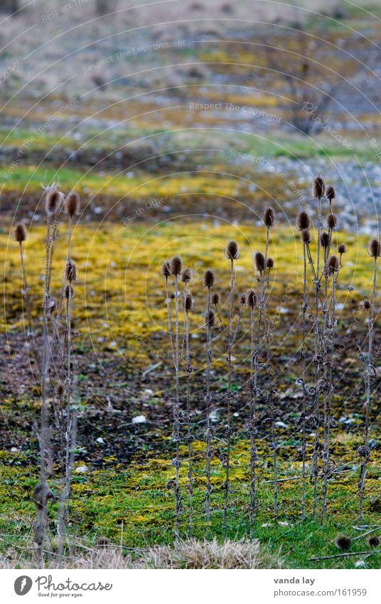 Camourflage Natur Herbst Wiese Gras Berge u. Gebirge Stein Sand Landschaft Erde Sträucher Boden Bodenbelag wild Moos Verschiedenheit Vielfältig