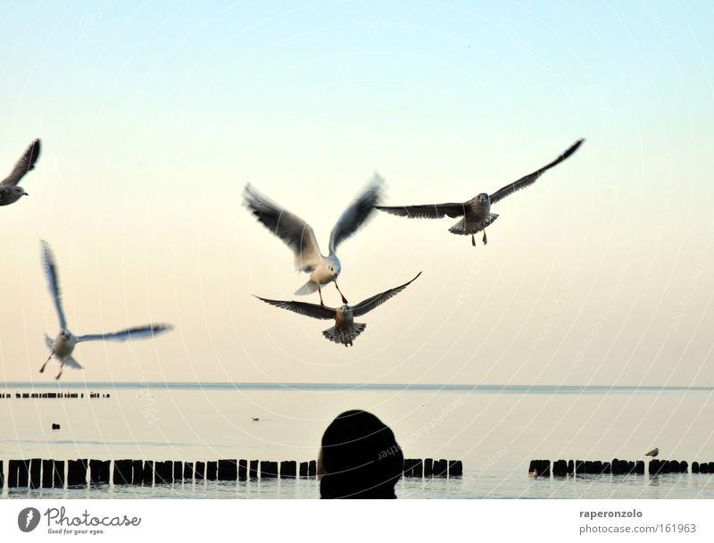 hitchcock light Himmel blau kalt Luft Vogel fliegen Flügel Möwe Verlauf ausgestreckt flattern attackieren Wolkenloser Himmel Geschwader