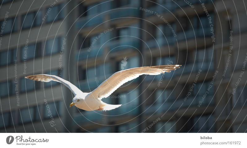 Aufwind Stadt Strand Wärme Vogel Küste elegant fliegen Erfolg frei Perspektive Luftverkehr Feder Flügel leicht aufwärts Möwe