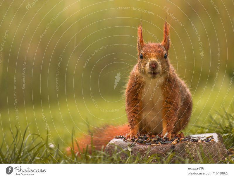 Squirrel grün Tier gelb Leben orange Zufriedenheit Idylle Wildtier sitzen ästhetisch beobachten niedlich Freundlichkeit Neugier nah Vertrauen