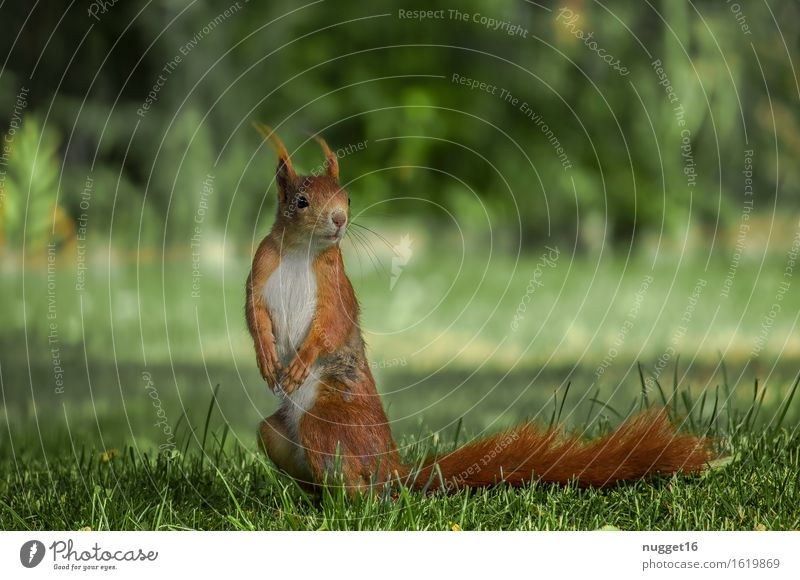 my little friend schön grün ruhig Tier natürlich orange Zufriedenheit Wildtier ästhetisch stehen beobachten niedlich Freundlichkeit Neugier Frieden Fell