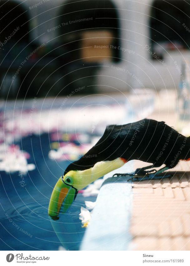 Der Wassertrinker I Natur grün blau Sommer ruhig schwarz Tier gelb Garten orange Vogel Wassertropfen trinken Schwimmbad